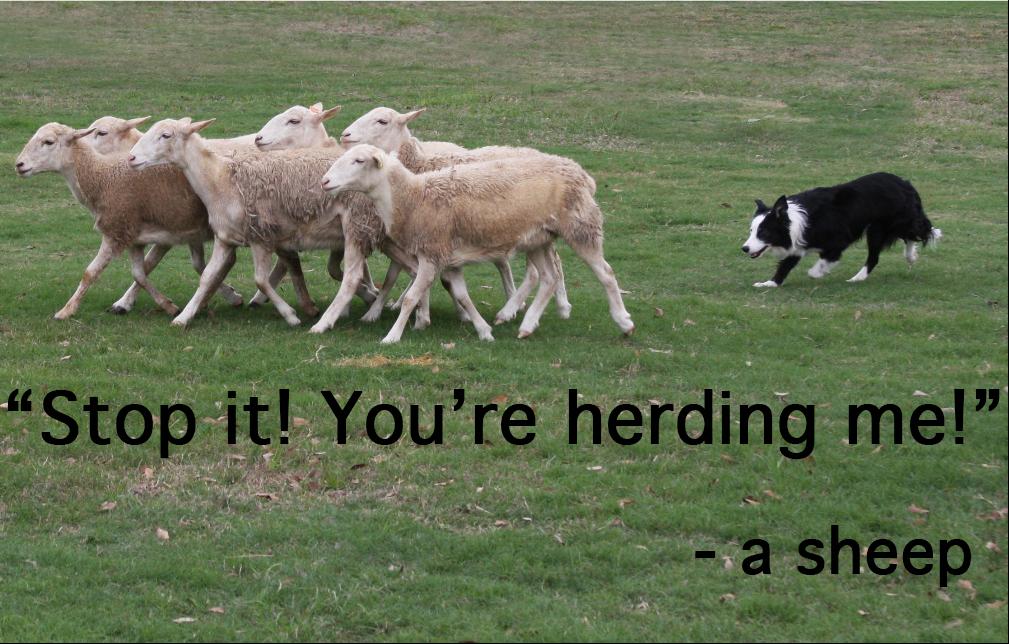 herdingme