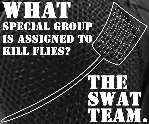 fly-swatter-hi